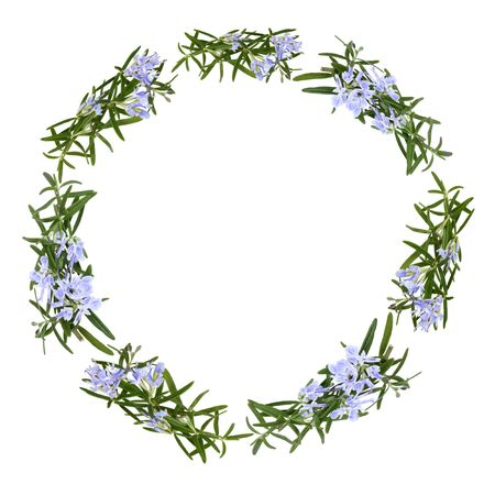 rosemary flower: Rosemary herb flowers forming a circular garland isolated over white background.