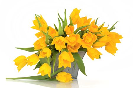 Yellow tulip  flowers in a pewter vase isolated over white background. Stock Photo - 6605851