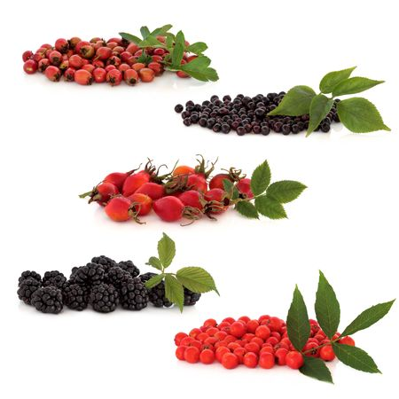 Wild fruit collection of hawthorn, elderberries, rosehips, blackberries and rowan berries, isolated over white background. Top to bottom. photo