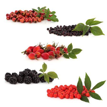 eberesche: Wild Obst Sammlung von Hawthorn, Holunderbeeren, Hagebutte, Brombeeren und Rowan Beeren, �ber wei�en Hintergrund isoliert. Oben nach unten. Lizenzfreie Bilder