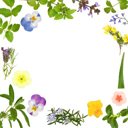 violas: Flower and herb leaves forming a border, isolated over white background.