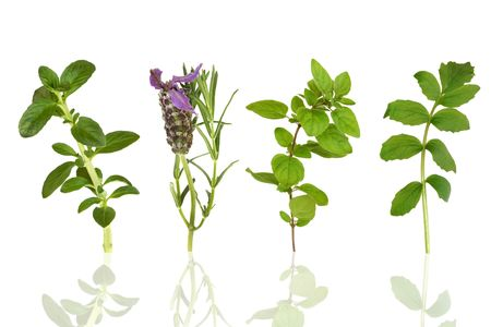 botanical remedy: Herb leaf selection of peppermint, lavender, oregano and valerian,  isolated over white background with reflection.