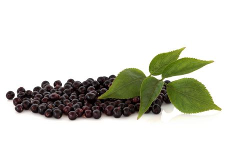 Elderberry fruit with leaf sprigs, isolated over white background.