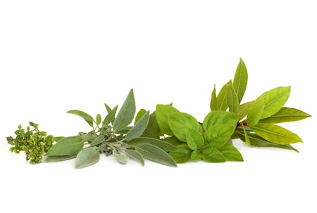 thymus: Thyme,  sage, oregano and bay leaf herbs,  isolated over white background.