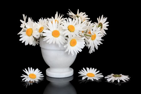 White oxeye daisy flowers in a marble vase over black background with reflection. photo