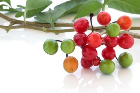 nightshade: Deadly nightshade berries over white background. Atropa belladonna.