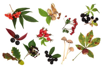 wild rose: Autumn harvest collection of wild fruit, nuts and berries with leaves, isolated over white background.