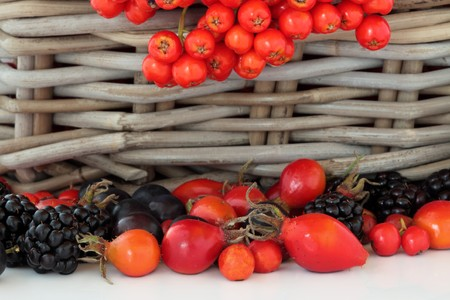 Rose hip, rowan berry and blackberry fruit, set against a rustic wicker basket, over white background. photo