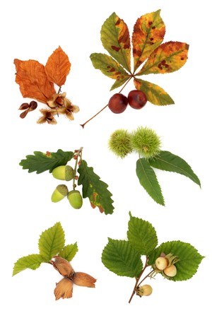 Acorn, hazelnut, beech, chestnut and conker nuts, with leaf sprigs, isolated over white background. photo