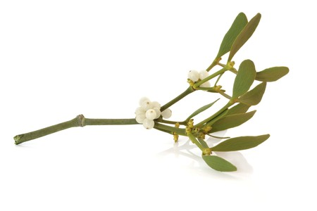 sprig: Mistletoe leaf and berry sprig isolated over white background.