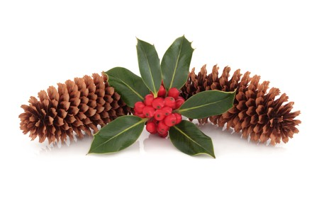 Holly red berry leaf sprig with two pine cones isolated over white background.