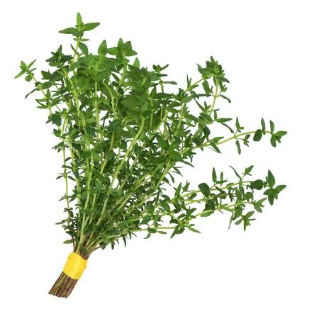 thyme: Tijm kruid bladeren gebonden in een posy geïsoleerd op witte achtergrond. Stockfoto