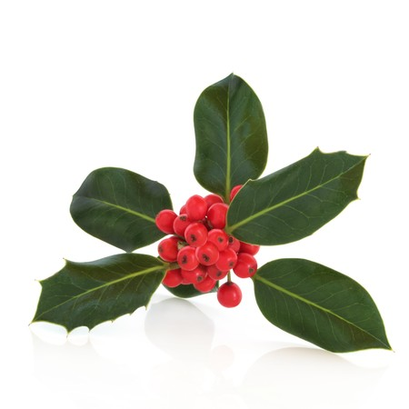 Holly leaf sprig with red berries, isolated over white background with reflection photo