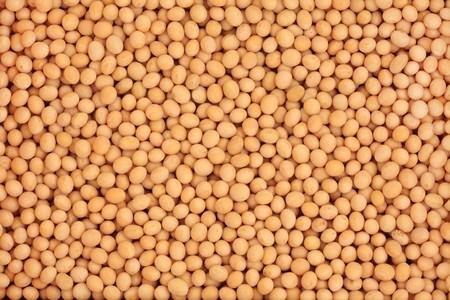 soya bean: Pulsos de haba de soja formando un fondo de textura.