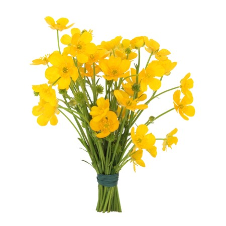 Buttercups tied in a bunch isolated over white background. Ranuculus Stock Photo - 8176843