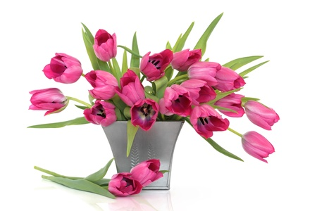 Pink tulip flowers in a distressed pewter pot and scattered, isolated over white background.