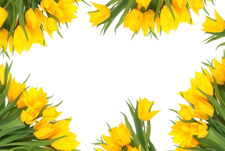 Yellow tulip flowers forming an abstract border, isolated over background. Stock Photo - 8424725