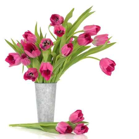 Pink tulip flowers in a distressed aluminum vase and scattered, over white background.