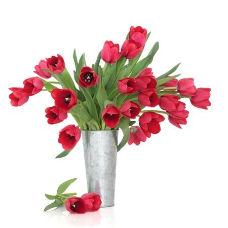 Red tulip flowers in a distressed aluminum vase and loose, over white background. photo