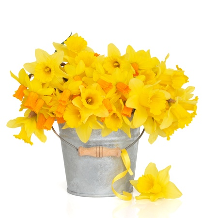 spring flowers:  Narcissus and daffodil spring flower arrangement in a distressed aluminum bucket with a yellow ribbon and one loose daffodil, over white background. Stock Photo