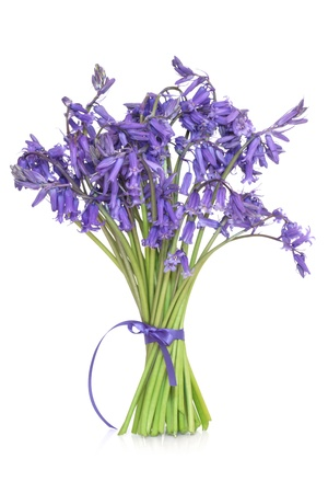 Bluebell flowers  tied in a bunch with ribbon, isolated over white background. photo