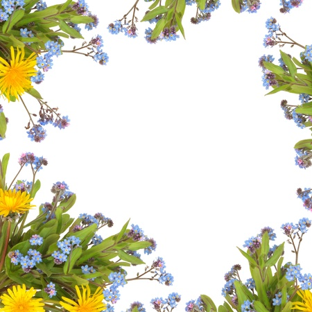 Dandelion and forget me knot flowers forming an abstract border, isolated over white background.