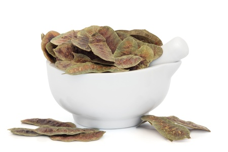 laxative:  Senna pods in a porcelain mortar with pestle over white background. Natural laxative. Stock Photo