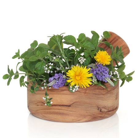 Lavender and thyme in flower with mint, rosemary and oregano herb leaf sprigs with wild dandelion flowers in an olive wood mortar with pestle, isolated over white background. Stock Photo - 9026451