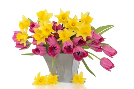 Tulip and daffodil flowers in a pewter vase, with loose daffodils, over white background. photo