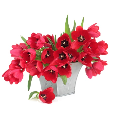 Red tulip flower arrangement in a  pewter vase, isolated over white background.