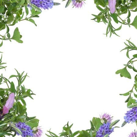 borde de flores: Lavanda, tomillo y cebollino flores con hojas de hierba de Romero y Melisa formando una frontera abstracta, aislada sobre fondo blanco.