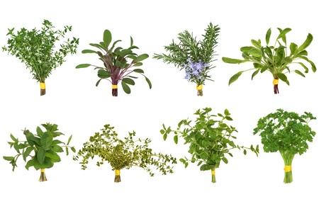 tomillo: Selecci�n de posy de hojas de hierba de or�gano, Romero, melisa, variedades de perejil y salvia y tomillo aisladas sobre fondo blanco. Foto de archivo