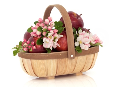 Apple flower blossom and leaf sprigs in a rustic wooden basket, isolated over white background. Empire variety. Stock Photo - 9450737