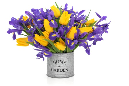 isolated irises: Iris and tulip flower arrangement in an old metal tin can with home and garden printed on the front isolated over white background. Stock Photo