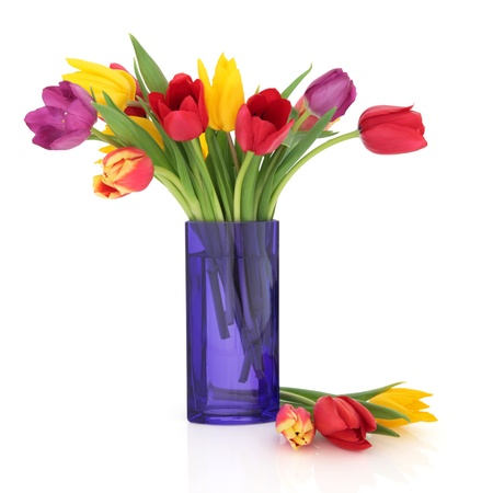 Tulip flowers in rainbow colours in a blue glass vase and loose isolated over white background.