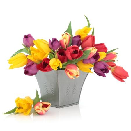 Tulip blühen Anordnung in Regenbogenfarben in einer distressed Zinn Vase und lose isolated over white Background.