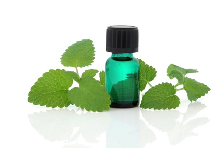 melissa: Lemon balm herb leaf sprigs and an aromatherapy essential oil glass bottle isolated over white background. Melissa officinalis.
