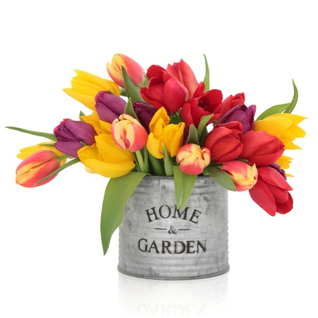 Tulip flower arrangement in rainbow colours in an old aluminum tin can with home and garden in words isolated over white background.