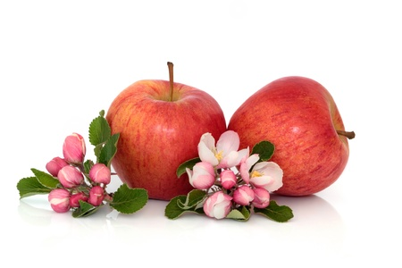 apple blossom: apple, fruit, blossom, flower, nature,fresh,red, gala,  apples, flowers, spring, snack, food, flora, leaf, two, isolated, white, background Stock Photo