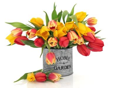 arreglo floral: Arreglo de flores de tulipán en una vieja lata de aluminio con casa y jardín en palabras aisladas sobre fondo blanco.