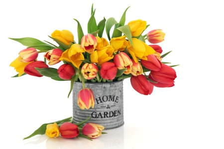 Tulip flower arrangement in an old aluminum tin can with home and garden in words isolated over white background.