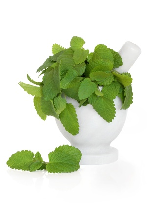 mosquitoes: Lemon balm herb leaf sprigs in a marble mortar with pestle and loose, isolated over white background. Melissa officinalis. Alternative remedy as repellent for mosquitoes. Stock Photo