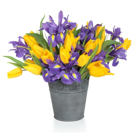 Purple iris and yellow tulip flower arrangement in a distressed metal vase and loose isolated over white background. photo