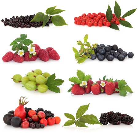 Raspberry, strawberry, gooseberry, blueberry, blackberry, elderberry, rowan, rose hip and sloe, fruit, isolated over white background. photo