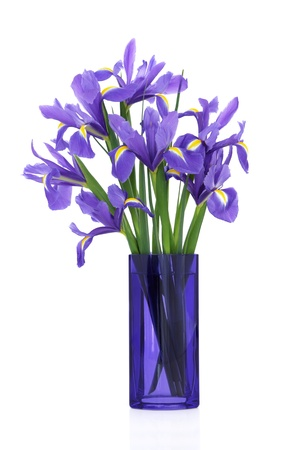 glass vase: Iris flower arrangement in a blue glass vase isolated over white background. Blue flag variety. Stock Photo