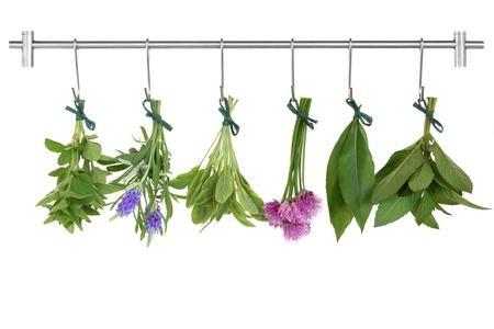 cebollin: Esqueje de hoja y flor de hierba empató en racimos de secado en un rack de acero inoxidable con ganchos, orégano, lavanda, abigarrado sage, cebolletas, Bahía y menta, aislado sobre fondo blanco.