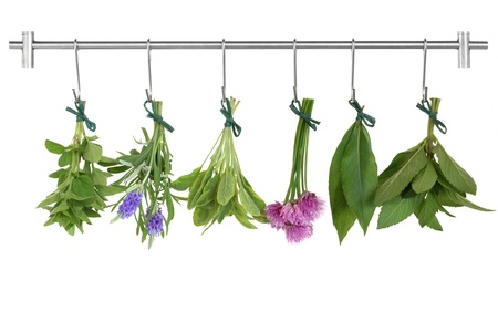 chives: Herb leaf and flower sprigs tied in bunches drying on a stainless steel rack with hooks, oregano, lavender, variegated sage, chives, bay and mint, isolated over white background.