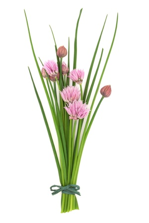 chives: Chives herb leaf and flower sprigs tied in a bunch, isolated over white background. Stock Photo