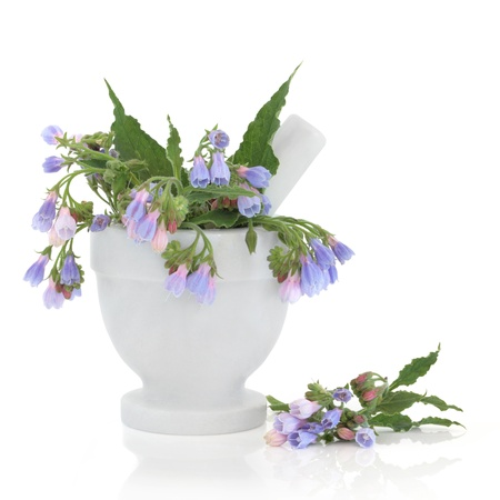 comfrey:  Comfrey herb flower and leaf sprigs in a marble mortar with pestle and loose, isolated over white background. Used for skincare. Stock Photo
