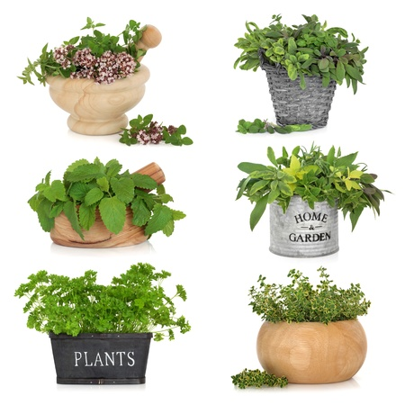 sampler: Herb leaf selection in various containers including, thyme, sage, parsley, oregano and lemon balm, isolated over white background.